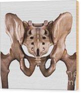 Pelvis Joints Wood Print