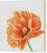 Perfect Poppy Wood Print