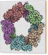 Peroxiredoxin 4 Antioxidant Enzyme Wood Print