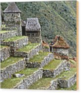 Peru: Machu Picchu Wood Print