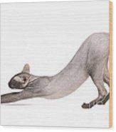 Peterbald Cat Wood Print