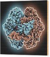 Phosphoglucose Isomerase Molecule Wood Print