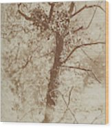 Photograph Of A Tree Wood Print