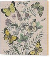 Pieridae Wood Print