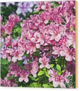 Pink And Blue Rhododendron Wood Print
