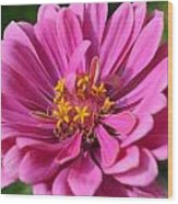 Pink And Yellow Flower Wood Print
