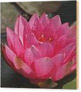 Pink Bloom... Wood Print