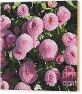 Pink Button Pom Flowers Wood Print