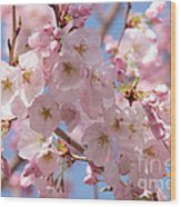 Sunlight On Spring Blossoms Wood Print