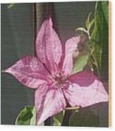 Pink  Clematis   # Wood Print