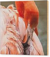 Pink Flamingo At A Zoo In Spring Wood Print