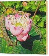 Pink Lotus And Leaf In A Pond Wood Print