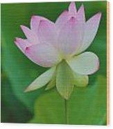 Pink Lotus Flower Wood Print