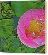 Pink Lotus In Backyard Of Home In Bangkok-thailand. Wood Print