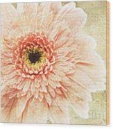 1 Pink Painterly Gerber Daisy Wood Print