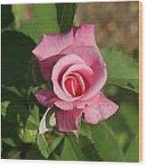 Pink Rose... Wood Print