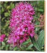 Pink Spirea Wood Print