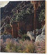 Plants On Landscape, Anza Borrego Wood Print