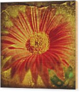 Plastered Petals Wood Print