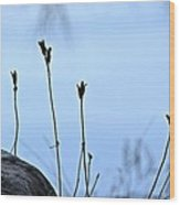 Pods On Pond Wood Print