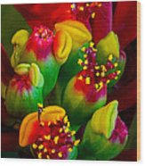 Poinsettia Flowers Wood Print