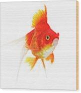 Poisson Rouge Queue De Voile Carassius Wood Print