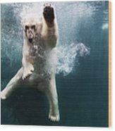 Polarbear In Water Wood Print