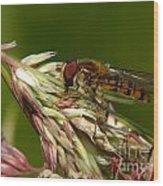 Pollinator Wood Print