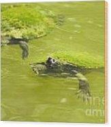 Pond Turtles Wood Print
