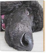 Poodle Close-ups 1 Wood Print
