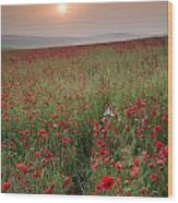 Poppy Field Landscape In Summer Countryside Sunrise Wood Print