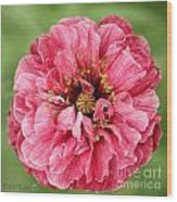Poppy From The Angel's Choir Mix Wood Print