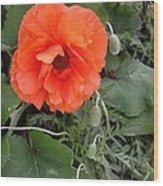 Poppy Wood Print