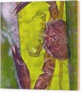 Porcelain Crab On Neptune Grass Wood Print
