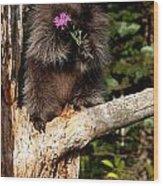 Porcupine    Hystrix Cristata  Wood Print