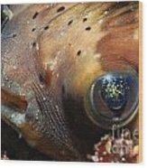 Porcupine Fish Wood Print by Sami Sarkis