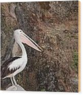 Portrait Of An Australian Pelican Wood Print