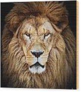 Portrait Of Huge Beautiful Male African Lion Against Black Backg Wood Print