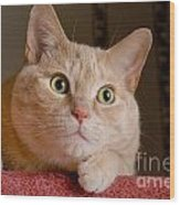 Portrait Orange Tabby Cat Wood Print