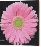 Pretty Pink Gerbera Daisy Wood Print