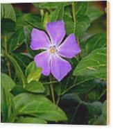 Pretty Purple Pinwheel Wood Print