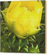 Prickly Pear Cactus Bloom  Wood Print