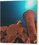 Prickly Tube-sponge And Tropical Reef In The Red Sea. Wood Print