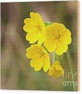 Primula Cowslip Fairy Cups Wood Print