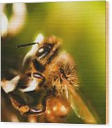 Process Of Pollination Wood Print