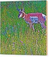 Pronghorn Among Wildflowers In Custer State Park-south Dakota Wood Print