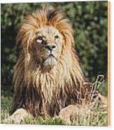 Proud Majestic Lion Wood Print