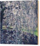 Prunus Subhirtella 'pendula' Wood Print