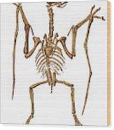 Pterodactylus, Extinct Flying Reptile Wood Print