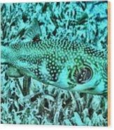 Puffer Fish Wood Print